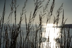 Last light in the Bay (jillyspoon) Tags: alpha sony dumfriesandgalloway monreith scotland view curtainofgrasses grasses eveninglight eveninb coast bay