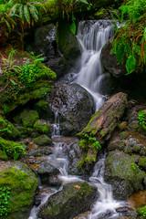 Trillium Falls (daviddalesphoto) Tags: trilliumfalls redwoodnationalpark california waterfall cascade stream longexposure landscape