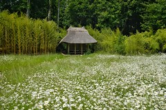 East or West? Kingston Lacy. (margaretgeatches) Tags: summer trees bamboo oriental summerhouse thatch meadow green white yellow oxeyedaisy leucanthemumvulgare nationaltrustproperty kingstonlacy wimborneminster dorset