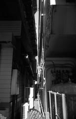 ひかりのみち (Dinasty_Oomae) Tags: leicaiiia leica ライカiiia ライカ 白黒写真 白黒 monochrome blackandwhite blackwhite bw outdoor 東京都 東京 tokyo 江東区 kotoku