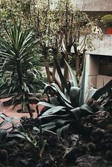 El Colegio (hectorhdezpz) Tags: nikonfe nikon nikkor50mm18 pushedfilm fujc200 film filmisnotdead filmphotography