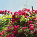 Flowers in Vylkove