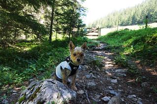Hiking to Mannlichen