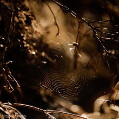 Aussie Winter Wonderland (Helen C Photography) Tags: nature winter wetlands bushland light sunlight backlight spider web spiderweb tamron 2470