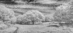 HORSENDEN HILL 19 (Nigel Bewley) Tags: horsendenhill ealing greenford perivale london england uk unlimitedphotos nigelbewley photologo july july2019 sky clouds canonef1635mmf28liiusm canon5dmkii 830nm infrared digitalinfrared advancedcameraservices blackandwhite blackwhite creativephotography artphotography amateurphotographer appicoftheweek woods trees oak quercus stitch pano panorama