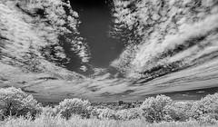 HORSENDEN HILL 20 (Nigel Bewley) Tags: horsendenhill ealing greenford perivale london england uk unlimitedphotos nigelbewley photologo july july2019 sky clouds canonef1635mmf28liiusm canon5dmkii 830nm infrared digitalinfrared advancedcameraservices blackandwhite blackwhite creativephotography artphotography amateurphotographer appicoftheweek woods trees