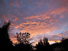 Somerset Sunset (Nevrimski) Tags: sunset thistles