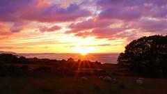 Sunset (Circled Thrice) Tags: ireland light sunset camp sky cloud sun water weather canon landscape eos rebel bay europe sheep sigma pasture vista tralee t3i dingle peninsula