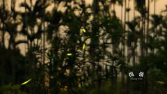 (Sheng-Ren) Tags: 梅嶺 螢火蟲 firefly 台南縣 台南 tainan 剪影 silhouette