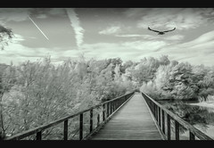 Are you going with me (Fr@ηk ) Tags: bridge water landscape sky river tree boardwalk cloud monochrome white nature pier walkway lake flying plant grass snow winter blackandwhite outdoor path fence bird monochromephotography building outdoors fog photo track ice photography atmosphere large land wood stockphotography railing guidance wooden waterfront body road boat man beach mrtungsten62 frnk europe infrared ir sony impressionism art artotint bw cinematic shadesodgray grey dare enhanting magic mysterious edit outside nol33z