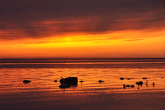 Sky On Fire (FlorDeOro) Tags: nikon d90 photography nature sunset reflection silhouette colorful seascape summer gotland sweden mijarajc