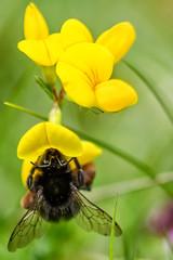 Estate (Sconsiderato) Tags: fiore fiori insetto insetti insect flower flowers nature natural natura macro eos sconsiderato canon 100mm