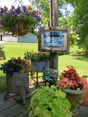 Signs And Plants. (dccradio) Tags: middletown md maryland frederickcounty outdoor outdoors outside surreybrooke surreybrookegardens june summer summertime wednesday afternoon goodafternoon wednesdayafternoon canon powershot elph 520hs grass lawn greenery yard sign signs words text planter planters plants sky tree trees foliage building architecture