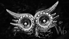 PWK-Macro-2019-Apr-16-0019-Wallpaper _3 (WAHLBRINKPhoto) Tags: owlstatue gardendecoration coppersculpture blackandwhite bnw bw metal nb baindebretagne illeetvilaine35 france