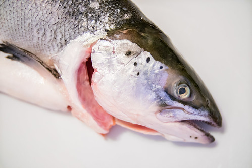 Close-up of a gutted salmon on white background