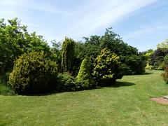 view dwarf Conifers 4.7.19 (ericy202) Tags: dwarf conifer bed lawn grass trees