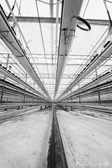 DN9A7741 (Josette Veltman) Tags: aardbeien ijsselmuiden kalter photowalk overijssel