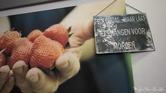 DN9A7705 (Josette Veltman) Tags: aardbeien ijsselmuiden kalter photowalk overijssel