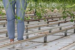 DN9A7909 (Josette Veltman) Tags: aardbeien ijsselmuiden kalter photowalk overijssel