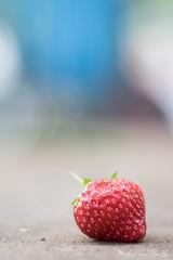 DN9A7903 (Josette Veltman) Tags: aardbeien ijsselmuiden kalter photowalk overijssel