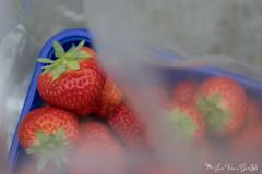 DN9A7798 (Josette Veltman) Tags: aardbeien ijsselmuiden kalter photowalk overijssel