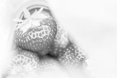 DN9A7797 (Josette Veltman) Tags: aardbeien ijsselmuiden kalter photowalk overijssel