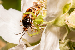 IMG_6845-tr (JLBenazra) Tags: insectes araignées