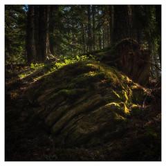 shades of green (B. Blue) Tags: grün österreich steiermark wald material natur stein austria nature styria wood stone schladming
