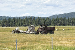 Old Truck and Goats (dwight g) Tags: canon 6d 70200mm truck stumps goats field trees clouds ps topaz
