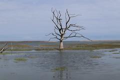 Marsh Life (grigorisgirl) Tags: marsh sea tree exmoor somerset porlock porlockmarsh tide high