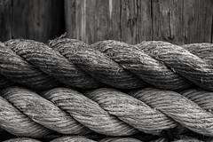 Ropes (L@nce (ランス)) Tags: rope wharf fishermanswharf monochrome bw macro micro nikk nikon canada britishcolumbia victoria jamesbay