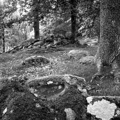 Halahult Offerlund (salparadise666) Tags: rolleiflex sl66 planar 80mm fomapan 100 boxspeed caffenol cl nils volkmer 6x6 square medium format slr landscape mystic place sweden blekinge län halahult offerlund