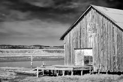 Old Barn (www.trinterphotos.com) Tags: padillabay mountvernon washington unitedstatesofamerica barn landscape trinterphotos richtrinter blackandwhite monochrome northwest