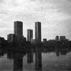 Shinobazu pond 2019 (Miroku Bosatsu) Tags: ueno japan tokyo voigtlander perkeo bnw caffenolc shinobazu pond diy filmshooters filmisnotdead filmcollective filmcamera filmphotography filmfeed shootfilm shootfilmstaypoor shootfimnotmegapixels shootfilmstaybroke