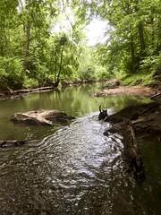 Adventure Dog Ventures Into the Wild (phthaloblu) Tags: adventuredog dozer exploring hiking boldmoonpreserve passiveparks mcleansville guilfordcounty northcarolina nc usa