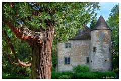 Au coeur du parc (Pascale_seg) Tags: parc jardin été summer estate château castle castello arbre tree albero moselle lorraine grandest france volstroff nikon