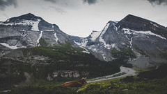 Cold Summer Day (Dominik Dilger) Tags: kandersteg suisse schweiz berge mountain kuh cow canon landscape landschaft nature natur schnee snow sky himmel wolken cloud wald forest sigma dominik dilger gebirge rinderhorn