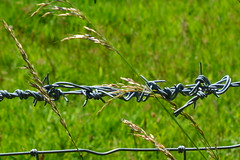 Entangled (suekelly52) Tags: entangled barbedwire smileonsaturday