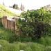 Megaliths in Baalbek quarry_09156