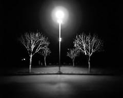 (Ian El Colo) Tags: 4x5 graflex largeformat portlandatnight hp5 format ilford tilt shift night long exposure black white trees film