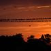 Concerto No 2 en Sol mineur, tramonto!