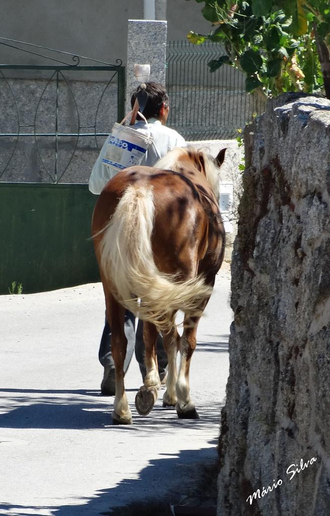 Águas Frias (Chaves) - ...dono e cavalo de crias e rabo loiro, lado a lado ...