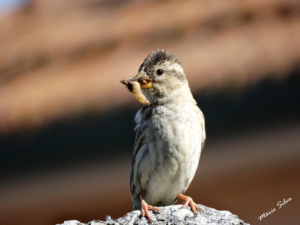 Águas Frias (Chaves) - ... ave com o almoço no bico ...
