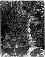 Looking down on back yard (jhotopf) Tags: schneiderkreuznach xenar135mmf45 fp4 ilford analogue largeformat acutol mppmkvii london