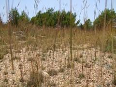 2019_lsnape_wildgrass_DSCF2759 (Star Rocker) Tags: spain wildgrass grassland wilderness