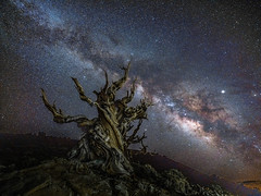 Fujifilm GFX 100 Medium Format Mirrorless Camera at Ancient Bristlecone Pine Forest White Mountains! California Milky Way Astrophotography Night Astrolandscape Long Exposure! Elliot McGucken Fine Art Landscape Nature Photography! Fujifilm Fujinon GF 23mm (45SURF Hero's Odyssey Mythology Landscapes & Godde) Tags: fujifilm gfx 100 medium format mirrorless camera ancient bristlecone pine forest white mountains california elliot mcgucken fine art landscape nature photography fujinon gf 23mm f4 r lm wr lens for format