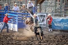 27 of 52: Cowboy Up [EXPLORED] (SoCal Mark) Tags: bigfork montana mt rodeo horse bronc bronco saddle cowboy up rope cow boy project 52 challenge alders 2019 flathead 27 explore explored