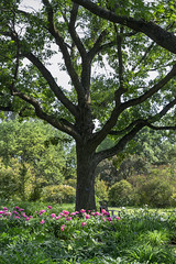 Tree of Life (parsonsandrew1) Tags: nikon d3200 1855mm tree life garden jardin garten montreal canada green flowers botanic botancial botanique