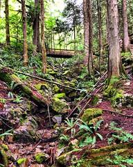 Bridge the Forest (Pennan_Brae) Tags: peaceful walking walk hike hiking green trees moss nature forest bridge