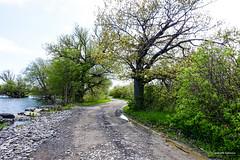 Winding Road (gabi-h) Tags: road trees lakeontario rocky stones water bushes princeedwardpoint princeedwardcounty longpoint pointtraverse gabih landscape